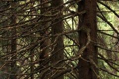 Tło natury zwarty las Zdjęcie Royalty Free