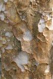 Tło od drewna 246 Fotografia Royalty Free