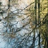 Tło odbicie drzewa w wodzie Obraz Royalty Free