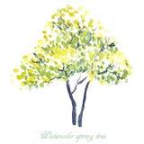 tło odosobnionej wiosny drzewny biel ilustracja wektor