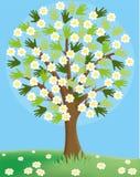 tło odosobnionej wiosny drzewny biel Fotografia Stock