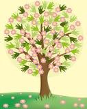 tło odosobnionej wiosny drzewny biel Obraz Stock