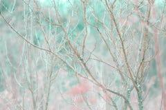 tło odosobnionej wiosny drzewny biel Fotografia Royalty Free