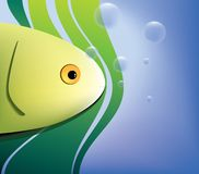 tło ryba Fotografia Stock