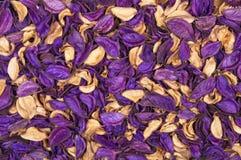 Tło susi kwiaty Obraz Stock