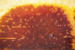Tło tekstura i wzór sekcja wosku honeycomb Obraz Stock