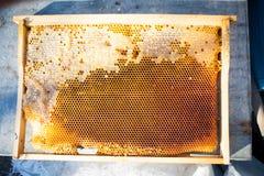 Tło tekstura i wzór sekcja wosku honeycomb Obraz Royalty Free