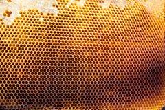 Tło tekstura i wzór sekcja wosku honeycomb Zdjęcia Royalty Free