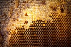 Tło tekstura i wzór sekcja wosku honeycomb Obrazy Stock