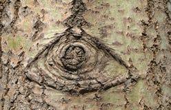 tło tekstura korowata naturalna Zdjęcia Stock