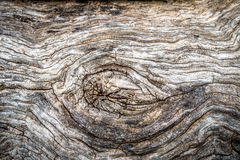 tło tekstura korowata naturalna Zdjęcie Stock