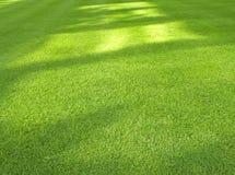 tło trawa Zdjęcie Stock
