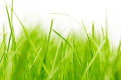 tło trawa Zdjęcie Royalty Free