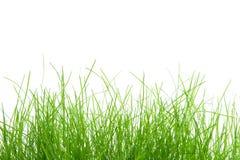 tło trawa Obraz Royalty Free