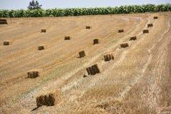 tło trawy hay pochylony w sunset Zdjęcia Royalty Free