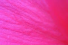 Tło w naturalnym czerwonym kolorze kwiaty, makro- fotografia Fotografia Royalty Free