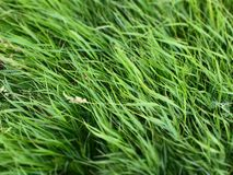 T?o ?wie?ej wiosny zielona trawa zdjęcie stock