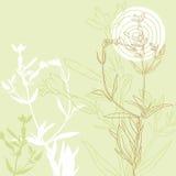 Tło wildflowers ilustracja wektor