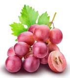 tło winogrona odizolowywali biel Obraz Stock