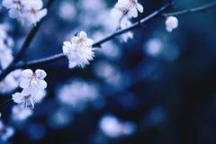 tło wiosna Zdjęcie Stock