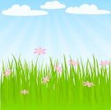 tło wiosna Obraz Stock