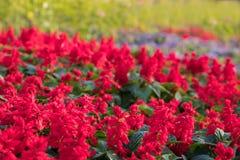 Tło wizerunek kolorowi kwiaty, Kolorowi kwiaty Zdjęcia Royalty Free