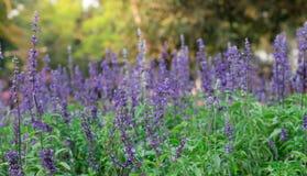 Tło wizerunek kolorowi kwiaty, Kolorowi kwiaty Obraz Royalty Free