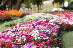 Tło wizerunek kolorowi kwiaty, Kolorowi kwiaty Obrazy Royalty Free