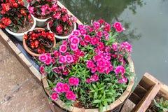 Tło wizerunek kolorowi kwiaty Obrazy Royalty Free