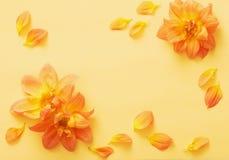 Tło z kwiat daliami Zdjęcia Stock