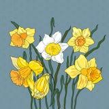 Tło z kwiatu narcyzem Zdjęcia Stock