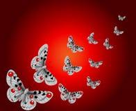 Tło z motylami Fotografia Stock