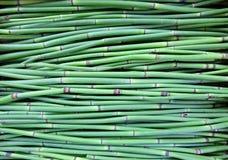 Tło zieleni drzewa Zdjęcie Stock