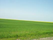 Tło zieleni niebieskie niebo i pole Fotografia Stock