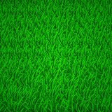 Tło zielona trawa Zdjęcia Stock