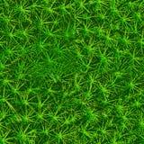 Tło zielony mech bezszwowa konsystencja obraz royalty free