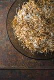 Tło zielony pszenicznego zarazka odgórny widok, zdrowy jedzenie Obraz Stock
