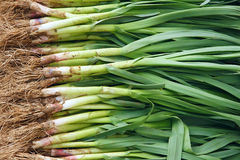 Scallion Obraz Royalty Free