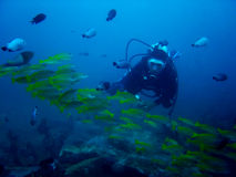 tłok Philippines akwalung akwarium Obraz Royalty Free