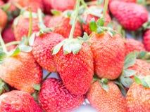 tła owoc odosobniony truskawkowy biel Zdjęcie Stock