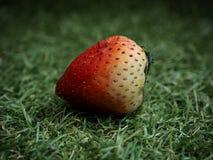 tła owoc odosobniony truskawkowy biel Obrazy Royalty Free