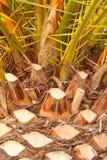 tła palmy wzoru tekstury drzewo Zdjęcia Royalty Free