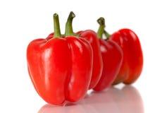 tła paprica czerwony biel Zdjęcie Stock