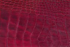 tła piegów skóry tekstura Zdjęcie Royalty Free