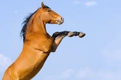 tła podpalanego konia wychowu niebo podpalany Fotografia Stock