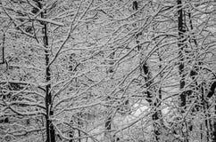 tła podstawowy elementów zgrupowana wzorów zima Fotografia Stock
