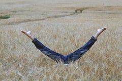 tła pola trawy krajobrazu niebo Zdjęcie Royalty Free