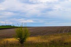 tła pola trawy krajobrazu niebo Obraz Stock