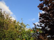 tła projekta naturalny nieb lato Zdjęcia Royalty Free