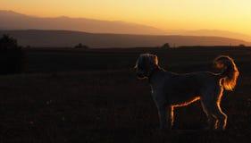 tła psi grunge sylwetki wektor Zdjęcie Stock